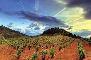 colourful-vineyard-view-Rioja
