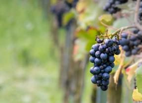 5 vinos de Estados Unidos que no son de California